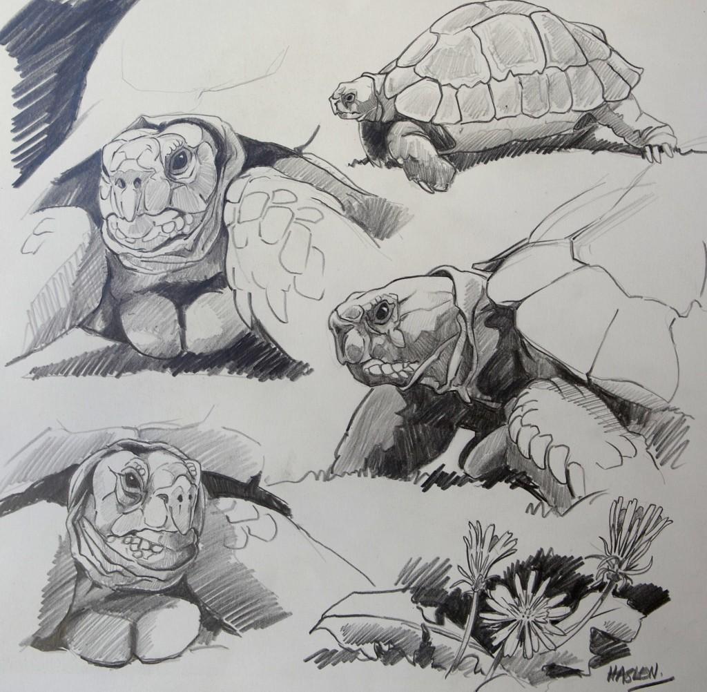 Tortoise Studies
