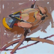 Waxwing Study sml